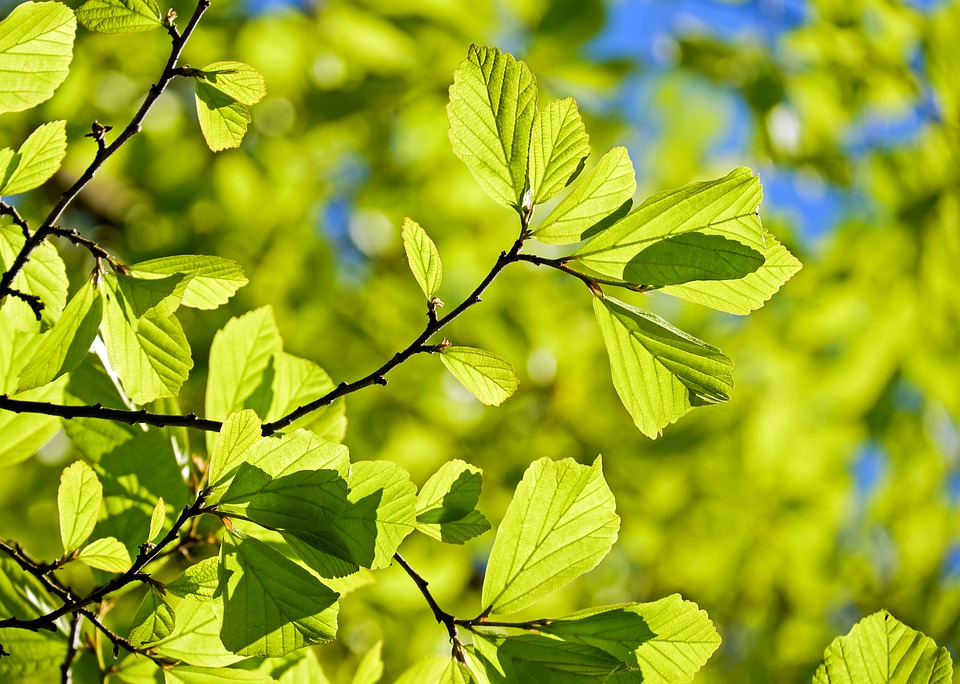 Zagłosuj na imię dla drzewa